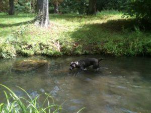 promenade canine en forêt
