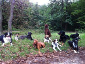 sortie de chiens dans le Bois de Vincennes