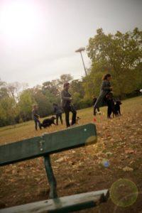 cours pour éduquer son chien près de Paris