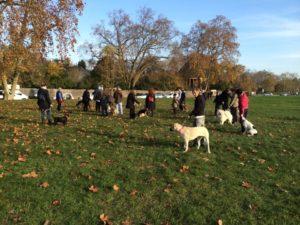 cours collectifs d'éducation pour chien en Ile de France