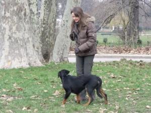 dressage de votre chien sur Paris