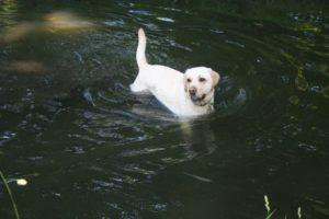 ballade canine dans le Bois de Vincennes