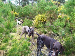 une promenade canine dans le Bois de Vincennes